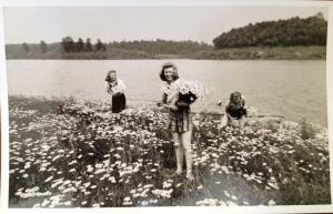 Daisies at Cherokee Lake on the Holston River. (1942)