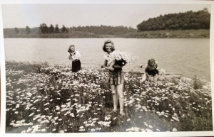 Daisies at Cherokee Lake on the Holston River. (1942)